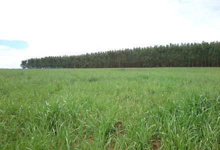 Propriedades no Mato Grosso do Sul - e-rural Imagens