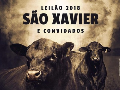 Leilão 2018 - São Xavier e Convidados