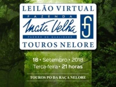 Leilão Virtual Touros Mata Velha