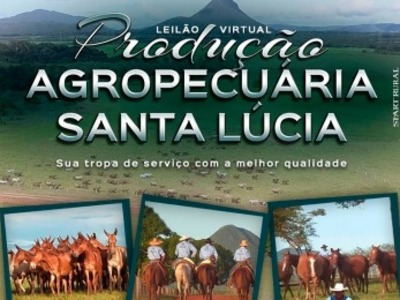 Leilão Virtual Produção Agropecuária Santa Lúcia