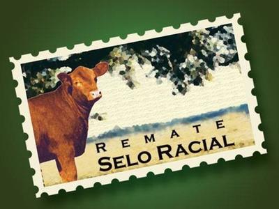 Leilão Selo Racial & Reserva Especial