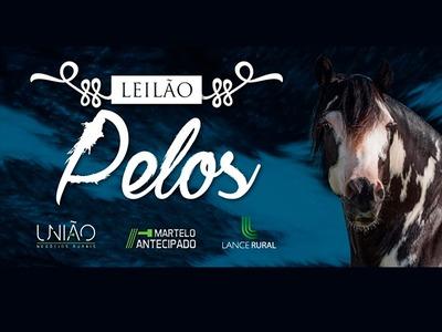 Leilão Pelos