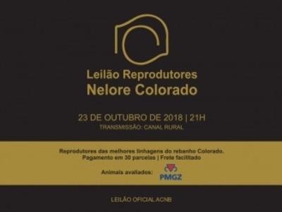 Leilão Virtual Colorado