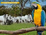 6º Leilão Virtual de Touros Fazenda Araras