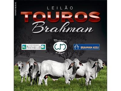 Leilão Virtual Touros Brahman