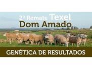 2º Remate Texel Dom Amado