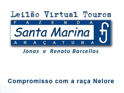 Leilão Virtual Touros Santa Marina