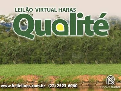 Leilão Virtual Haras Qualité