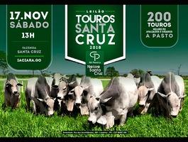 Leilão Touros Santa Cruz 2018