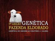 7º Leilão Genética Fazenda Eldorado