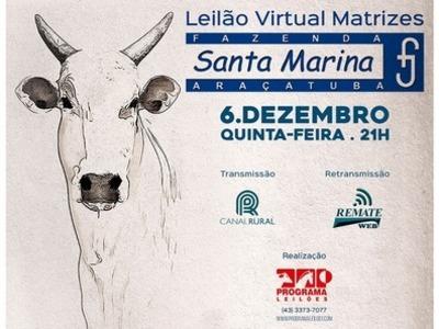 Leilão Virtual Matrizes Fazenda Santa Marina