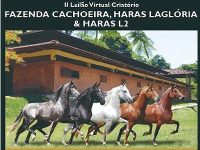 II Leilão Virtual Criatório Fazenda Cachoeira, Haras LaGlória & Haras L2