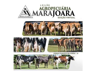 Leilão Virtual Agropecuária Marajoara