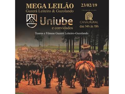 Mega Leilão Guzerá Leiteiro & Guzolando - Uniube e Convidados