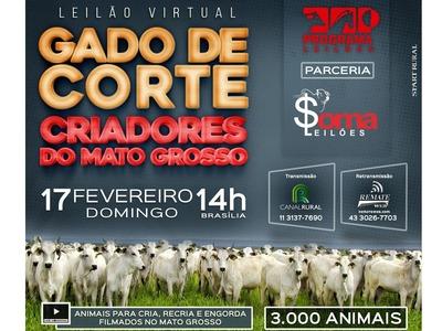 Leilão Virtual Gado de Corte - Criadores do Mato Grosso