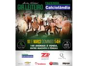 Leilão Virtual Gir Leiteiro Fazenda Calciolândia