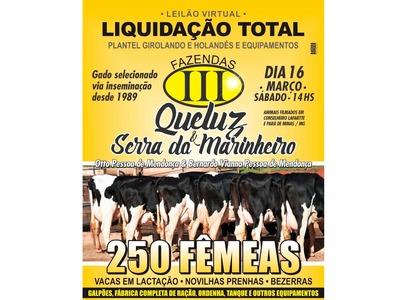 Leilão Virtual Liquidação Total Fazendas Queluz & Serra do Marinheiro