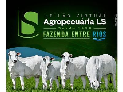 Leilão Virtual Agropecuária LS - Fazenda Entre Rios