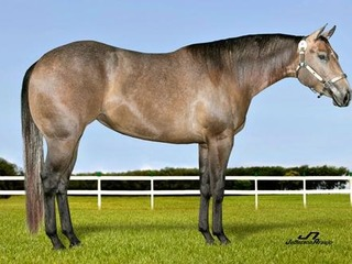 EMBRIÃO DE TIME N BLUES X DOX SILVER PISTOL